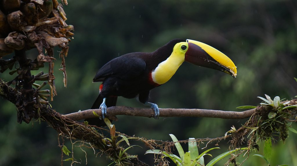 Áreas Silvestres Protegidas