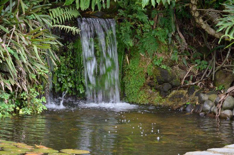 Pronunciamientos procuradur a general de la rep blica for Jardin botanico tarifas